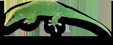 wee lizard