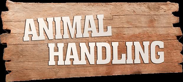 Animal Handling