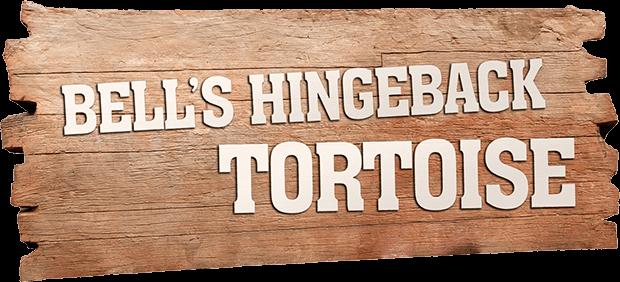 BELL'S HINGEBACK TORTOISE