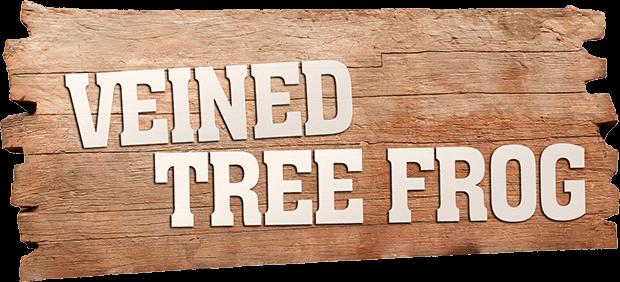 VEINED TREE FROG