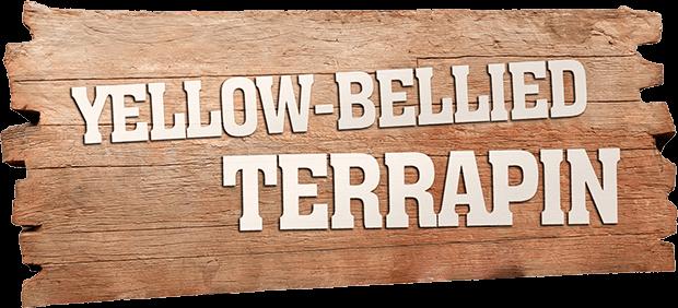 YELLOW-BELLIED TERRAPIN